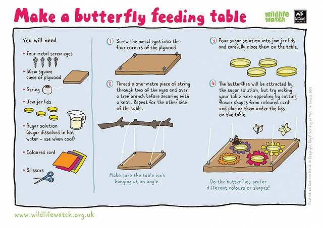 How to make a butterfly feeding table