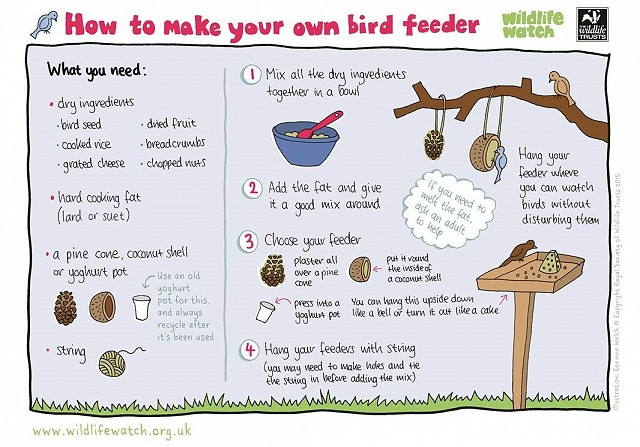 How to make your own bird feeder and bird food
